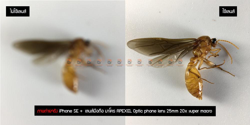 เลนส์มือถือ มาโคร APEXEL Optic phone lens 25mm 20x super macro lens รีวิว ภาพถ่ายแมลง